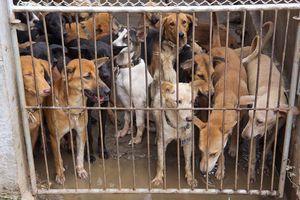 Làn sóng phản đối ăn thịt chó trên thế giới