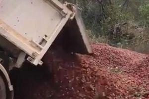 Clip: Xe tải chở hàng ngàn quả dâu tây đi tiêu hủy vì sợ lẫn kim khâu