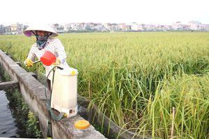 Nhập khẩu, sử dụng thuốc bảo vệ thực vật: Chưa hết mối lo