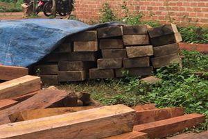 Phát hiện bãi tập kết gỗ lậu tại huyện Mang Yang