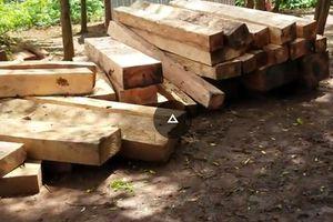 Vụ gỗ lậu ở huyện Mang Yang: Phát hiện 4 bãi tập kết
