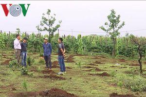 Vì đâu Gia Lai chậm xử lý các vụ mất rừng nghiêm trọng?