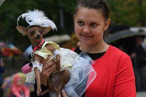 Ngắm cún cưng 'sắm vai siêu mẫu' trình diễn tại Moscow