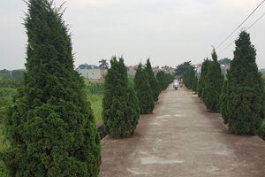 Đặng Xá - làng quê xanh