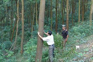 Quản lý rừng, hướng tiếp cận mới dựa vào công nghệ