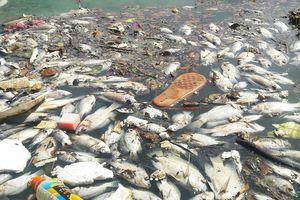 Gần 1 tấn cá chết nổi trắng hồ điều tiết ở Đà Nẵng