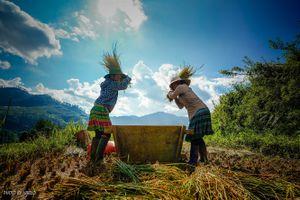 Lên núi xem người Mông làm du lịch