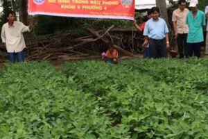 Khấm khá nhờ nghề nuôi dê, trồng đậu phộng ở đất nhiễm mặn