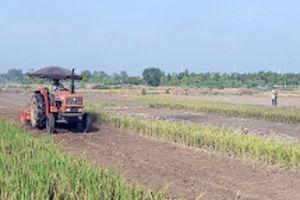 Từ nghị quyết về 'tam nông' đến nền nông nghiệp hiện đại (Tiếp theo và hết) (*)