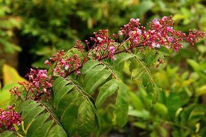 Những bài thuốc chữa viêm da cơ địa từ thiên nhiên