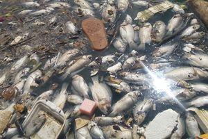 Cá chết trắng nổi lềnh bềnh tại hồ điều tiết sau cơn mưa