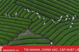 Bức ảnh hái chè ở cao nguyên Mộc Châu nổi bật trên tạp chí danh tiếng
