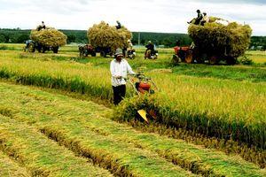 Ngành nông nghiệp: Làm gì để không bị tụt hậu?