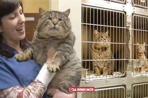 Bỏ nhà đi 'bụi' nửa năm, chú mèo phát tướng nặng tới 9kg, khi biết lý do ai cũng cười lăn