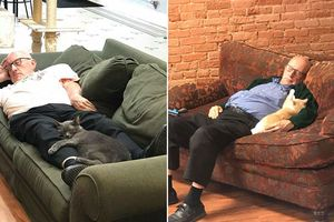 Tình nguyện viên 75 tuổi ngày ngày đến chải lông rồi ngủ cùng mèo ở trạm cứu hộ