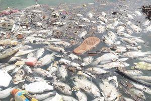 Đà Nẵng: Cá chết nổi trắng hồ điều tiết Phước Lý