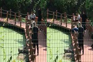 Du khách say xỉn dùng chân giẫm cá sấu trong khu bảo tồn gây phẫn nộ