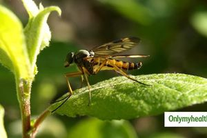 5 bệnh nguy hiểm lây truyền từ con muỗi