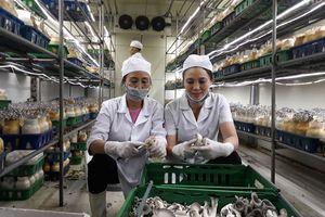 Sau 10 năm thực hiện nghị quyết về 'tam nông' tại Hà Nội: Đổi thay toàn diện