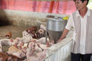 Giá heo hơi hôm nay 22/9: Giá lợn hơi liên tục tăng, sắp đắt nhất thế giới
