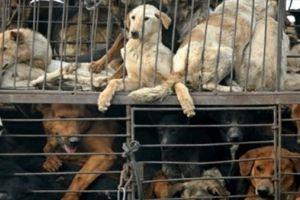 Nơi người dân giết chó ăn thịt ở đất nước văn minh bậc nhất châu Âu