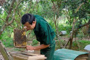 Ở nơi này có hộ nuôi ong mật kiếm cả trăm triệu đồng