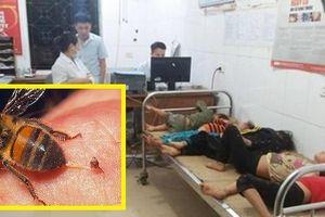 Nghệ An: Đi gặt lúa, 7 người bị ong tấn công phải nhập viện