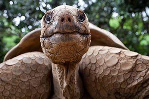 Kỳ lạ tìm thấy rùa chết trong … vùng kín của phụ nữ