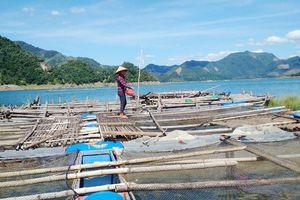 Bảo vệ hành lang hồ chứa thủy điện: Đổi thay ở Hiền Lương