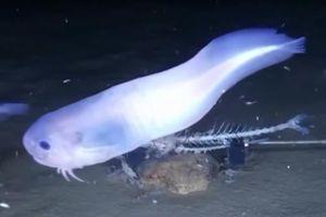 Phát hiện loài cá lạ cứ lên khỏi mặt nước là tan chảy