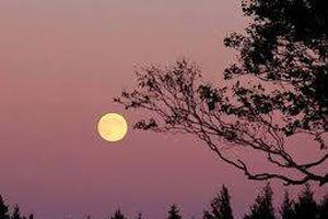 Đợi trăng