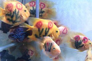 Dân chơi cá cảnh tròn mắt với cá 'xăm mình' 800.000 đồng/con