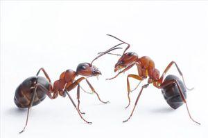 Con sâu, cái kiến