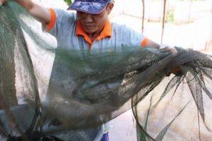 An Giang: Mùa nước nổi nhộn nhịp bắt cá tôm, hái bông điên điển