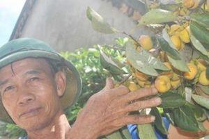 Nghệ An: Mê mẩn vườn hồng cổ thụ trĩu quả giữa trời thu