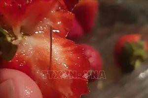 New Zealand phát hiện kim khâu trong dâu tây Australia
