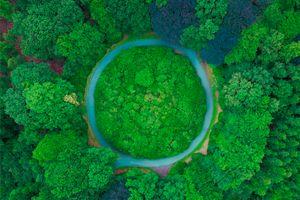 New Zealand đặt mục tiêu trồng 1 tỷ cây xanh để đối phó biến đổi khí hậu