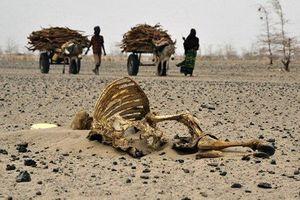 Kenya hạn hán dài: Hơn 700.000 người đối mặt với tình trạng thiếu thực phẩm