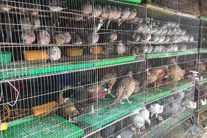 Cận cảnh chợ chim lớn nhất miền Tây