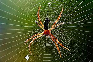 Bào chế vaccine từ tơ nhện - Bước đột phá của ngành y dược