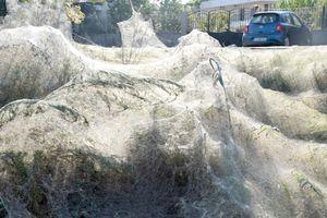 Mạng nhện phủ kín cả thị trấn ở Hy Lạp