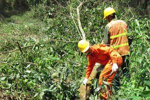 HTX kiểu mới Phú Hưng giàu nhất nhờ trồng rừng FSC