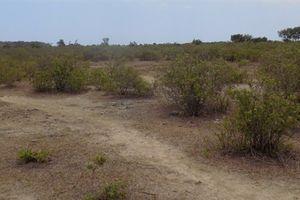 Thu hồi dự án Sân golf và biệt thự sinh thái Cam Ranh