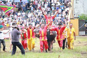 Lễ hội Chọi trâu Đồ Sơn: Ai được hưởng lợi từ thân xác các 'ông trâu'