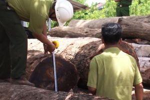 Vụ trùm gỗ lậu Phượng 'râu': Bắt đội trưởng Kiểm lâm cơ động