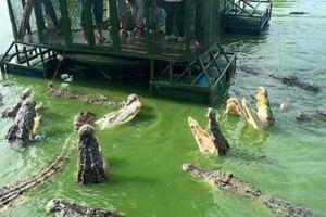 Ghé trang trại ở Thái Lan, thử tài câu cá sấu vừa dữ vừa đói giữa hồ