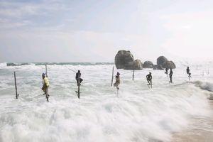 Câu cá trên cọc - sản phẩm du lịch đặc sắc của Sri Lanka