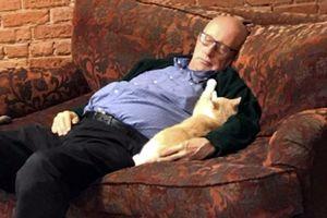 Dành cả ngày để ngủ với mèo