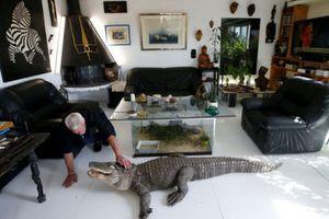 Ảnh động vật: Dị nhân sống cùng rắn độc, đại bàng xoay cổ...