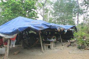 Thông tin mới vụ trùm gỗ Phượng 'râu': Bắt cán bộ Chi cục Kiểm lâm Đắk Nông